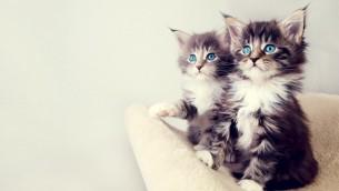 Dream Pets: Novos Presentes do CAM4